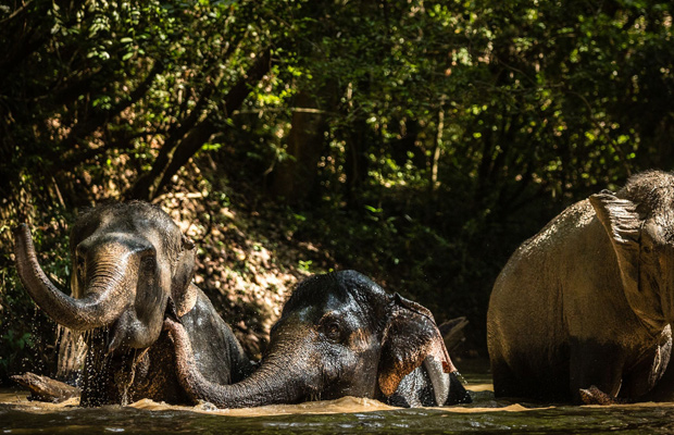 The Kulen Elephant Forest